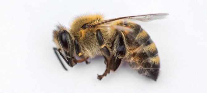 A prayer for the death of all the bees in our planet